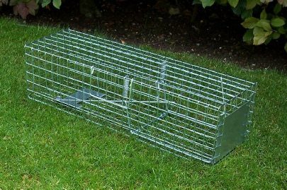 Professional double spring squirrel cage trap